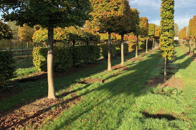 Winterhalter Pflanzenkontor - Ihr Pflanzengroßhandel für den Garten- und Landschaftsbau, Baumschulen und Kommunen